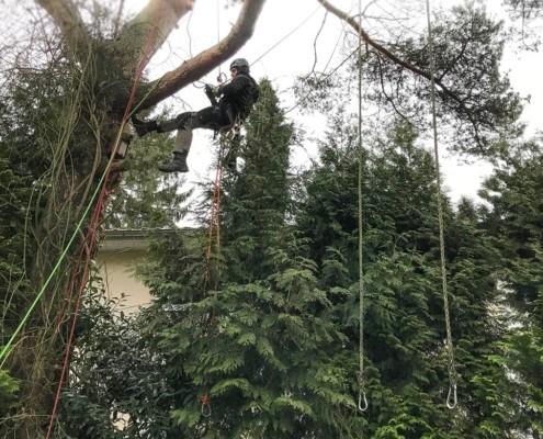 Baumpflege mit Totholzentfernung nach einem Sturmschaden