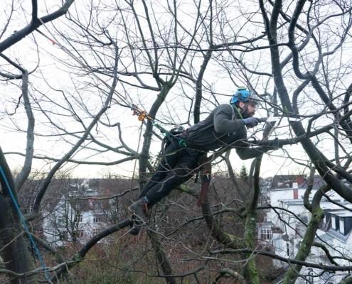 Kletterer pflegt Baumkrone